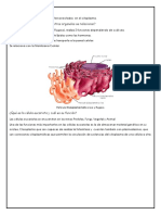 Retículo Endoplásmatico - Resumen