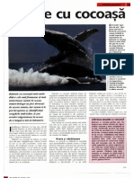 Arborele Lumii - Animale - Balene Cu Cocoasa