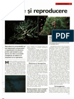 Arborele Lumii - Animale - Curtare Si Reproduce Re