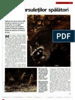Arborele Lumii - Animale - Familia Ursuletilor Spalatori