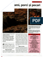 Arborele Lumii - Animale - Hipopotami Porci Si Pecari