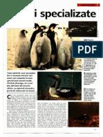 Arborele Lumii - Animale - Pasari Specializate