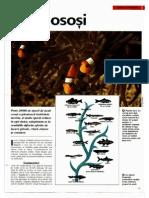Arborele Lumii - Animale - Pesti Ososi