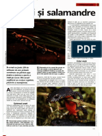 Arborele Lumii - Animale - Tritoni Si Salamandre