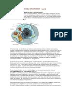 DESINTOXICACION-DEL-ORGANISMO.pdf
