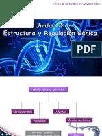 ADN Regulación génica 22.08.19.ppt