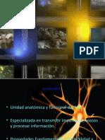 Copy of Funciones Neuron Ales (2)[1]