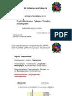 Eudicotiledoneas I.pdf