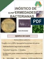 BACTERIA N 2 DIAGNOSTICO ENFERMEDADES 2014