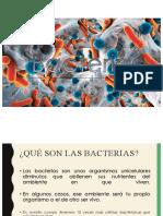 "Equipo 2 ""Bacterias"" FTP02A 20-2"