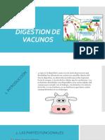 digestión de vacunos