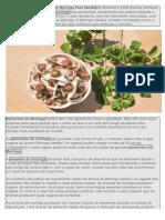 Os Benefícios da Semente de Moringa Para Saúdesão diversos e você precisa conhecer.docx
