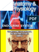Group 3 Endocrine System.ppt