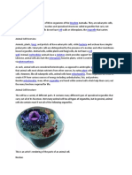 Animal Cell Definition.docx