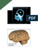 Autran Jr - Fisiologia Humana - Neuromuscular