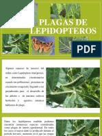 Plagas de lepidopteros.pptx