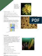 Concepto poriferos.docx