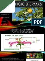 angiospermas diapositivas 2.0.pptx