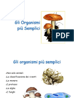 classificazione_viventi.ppt