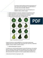 aguacate.docx