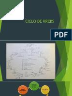 CICLO-DE-KREBS-1