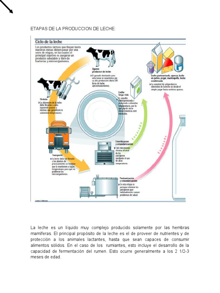 Circuito De La Leche : Etapas de la produccion de leche