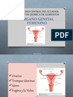 1.- Anatomía Aparato Reproductor Femenino.ppt