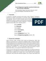 Proyecto de investigación Tetragonisca angustula (Final)