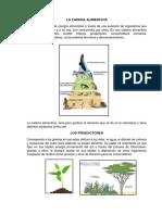 LA CADENA ALIMENTICIA.docx