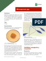 Microsporum spp 2017