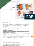 anatomi penginderaan
