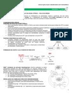 MEDRESUMOS 2014 - BIOQUÍMICA 06 - Ciclo do ácido cítrico