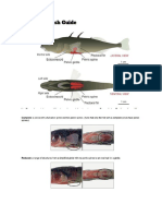 stickleback fish guide