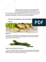 WHAT IS GMO.docx