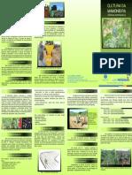 folder_mamona