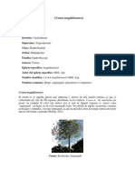 proyecto maderables 1.1.docx