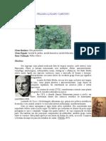 arruda.pdf