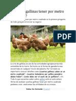 Cuántas gallinas tener por metro cuadrado