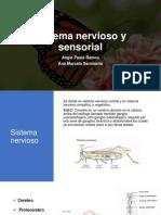 Sistema nervioso y sensorial
