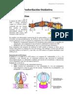 Fosforilación oxidativa.pdf