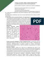 Reacción de las neuronas a la lesión, edema cerebral, hipertensión intracraneana, malformaciones y lesión cerebral perinatal