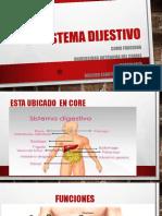 El sistema dijestivo mf