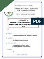 Informe Número 8 Fisiología