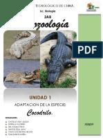 cocodrilo_proto.docx