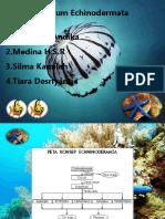 Phlum Echinodermata.pptx