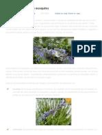 plantas repelentes de mosquitos _ Soluciones para el Huerto Urbano