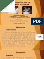 Proyecto-mosquito-en-ppt_monicaJBC.pptx