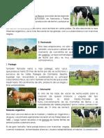 tipos de ganado