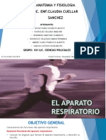 Anatomia, el sistema respiratorio