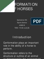 conformational deformities in horses copy